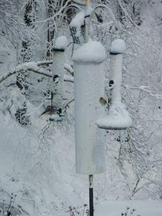 03-02-09-bird feeder