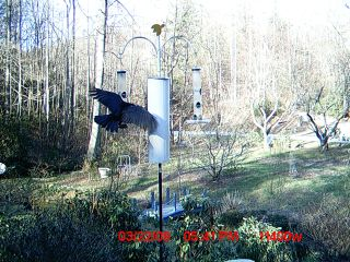 03-22-09, crow at feeder